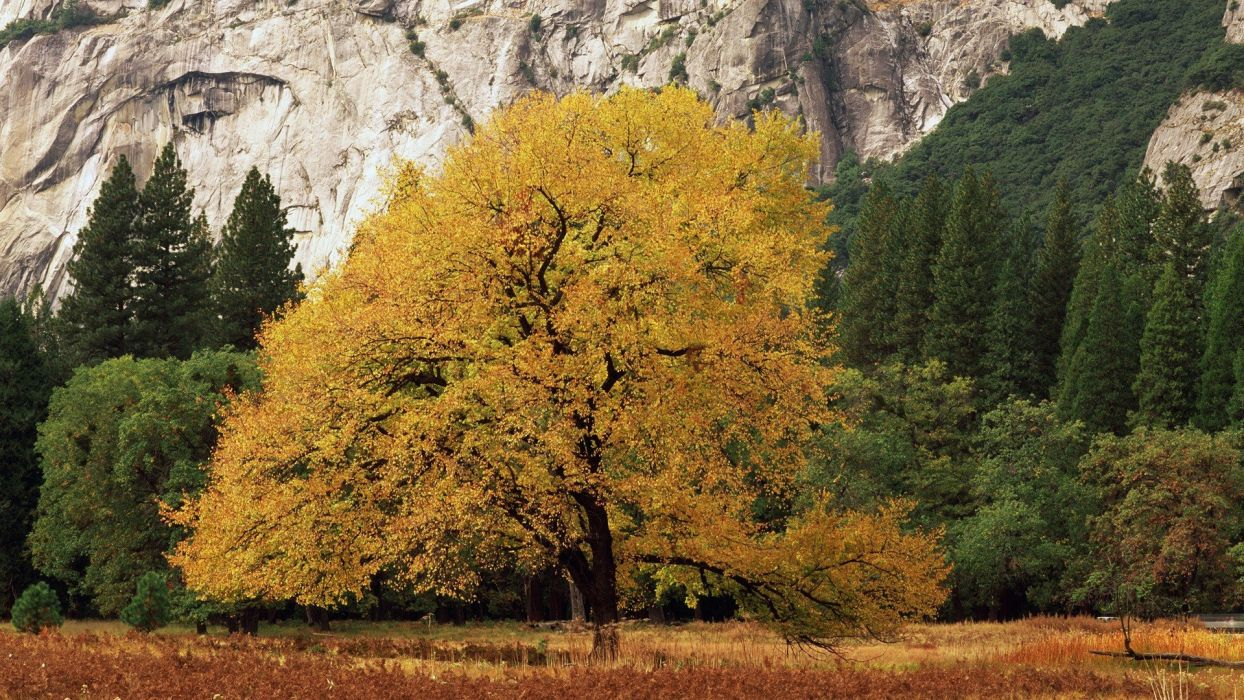 golden California National Park Yosemite National Park wallpaper