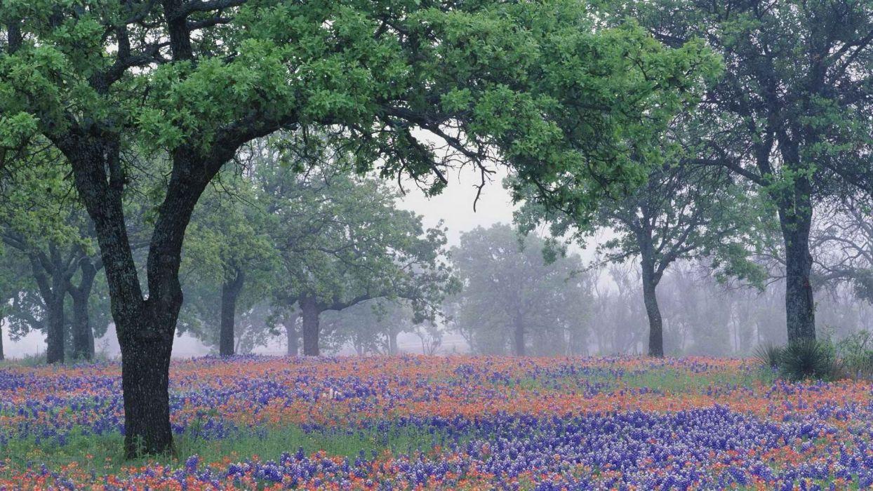 Texas oak wallpaper
