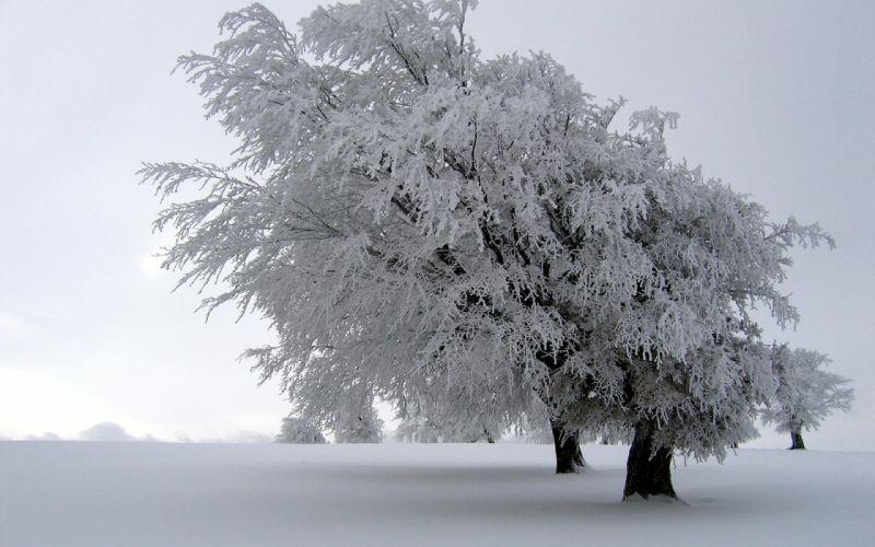 winter snow trees white fields wallpaper