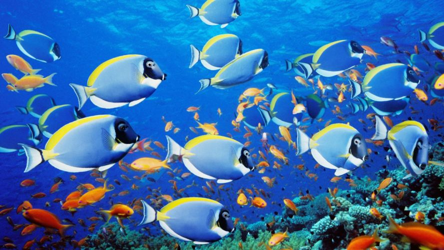 fish school Thailand wallpaper