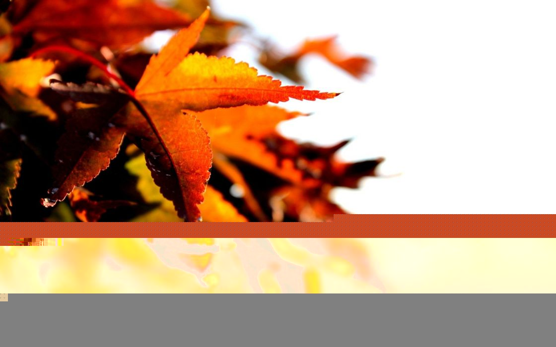 nature autumn leaves depth of field wallpaper