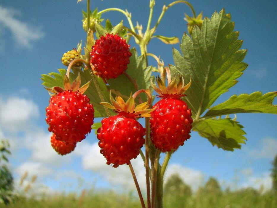 nature fruits grapes wallpaper