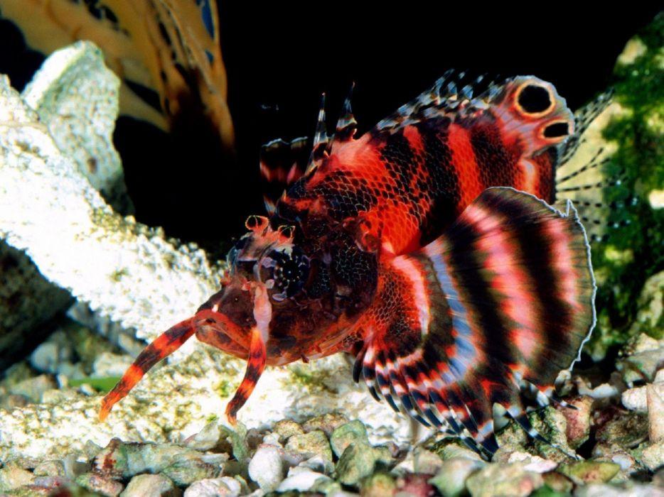 animals fish pebbles two wallpaper