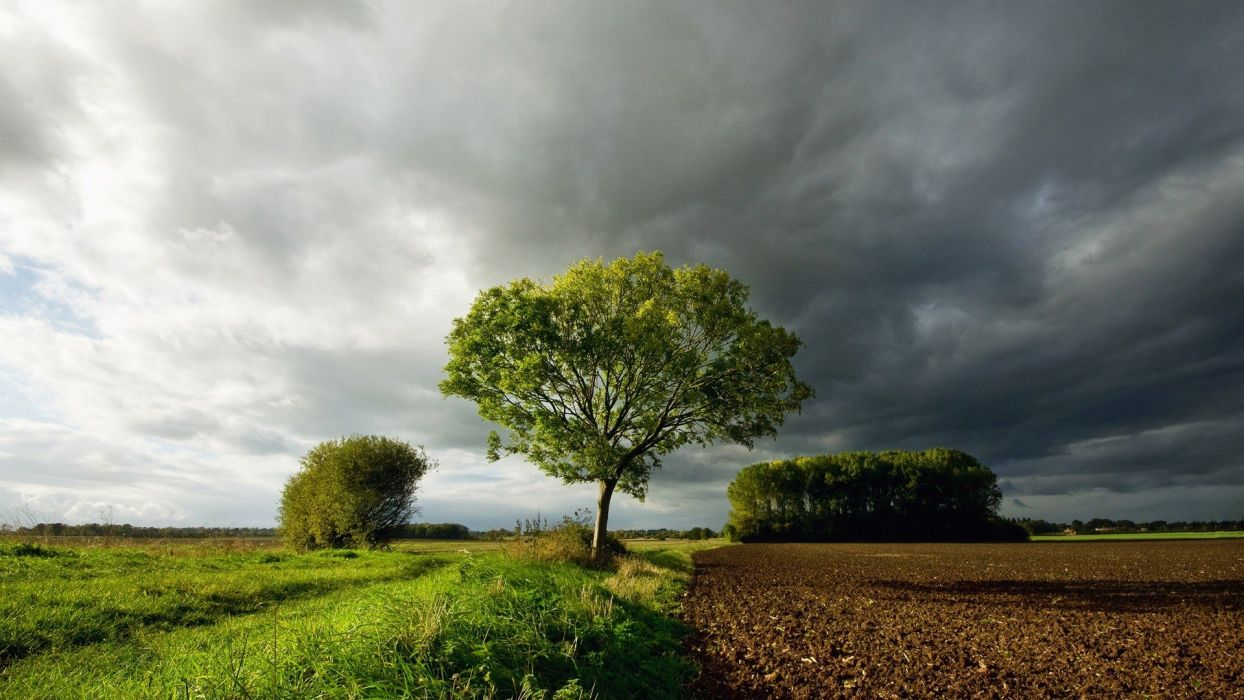 clouds landscapes nature trees grass farm sky wallpaper