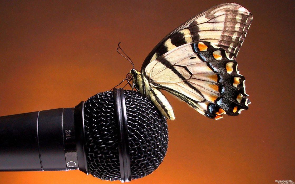 animals microphones butterflies wallpaper