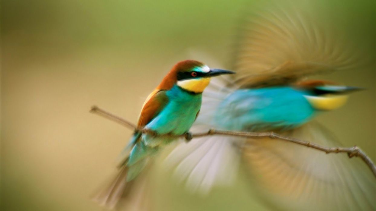 nature animal bird national geographic water reflection green hd wallpapers wallpaper