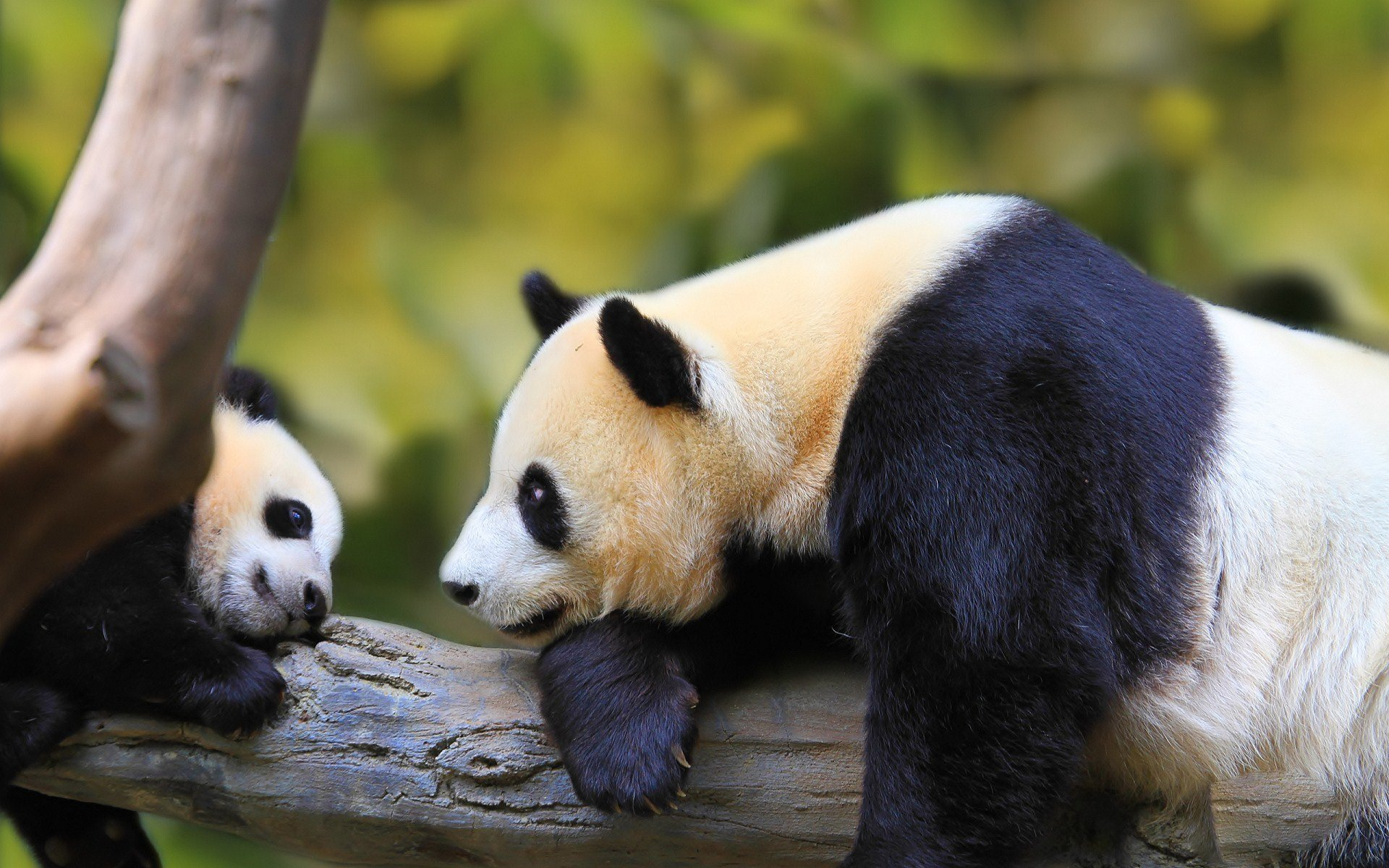 panda forest baby ...