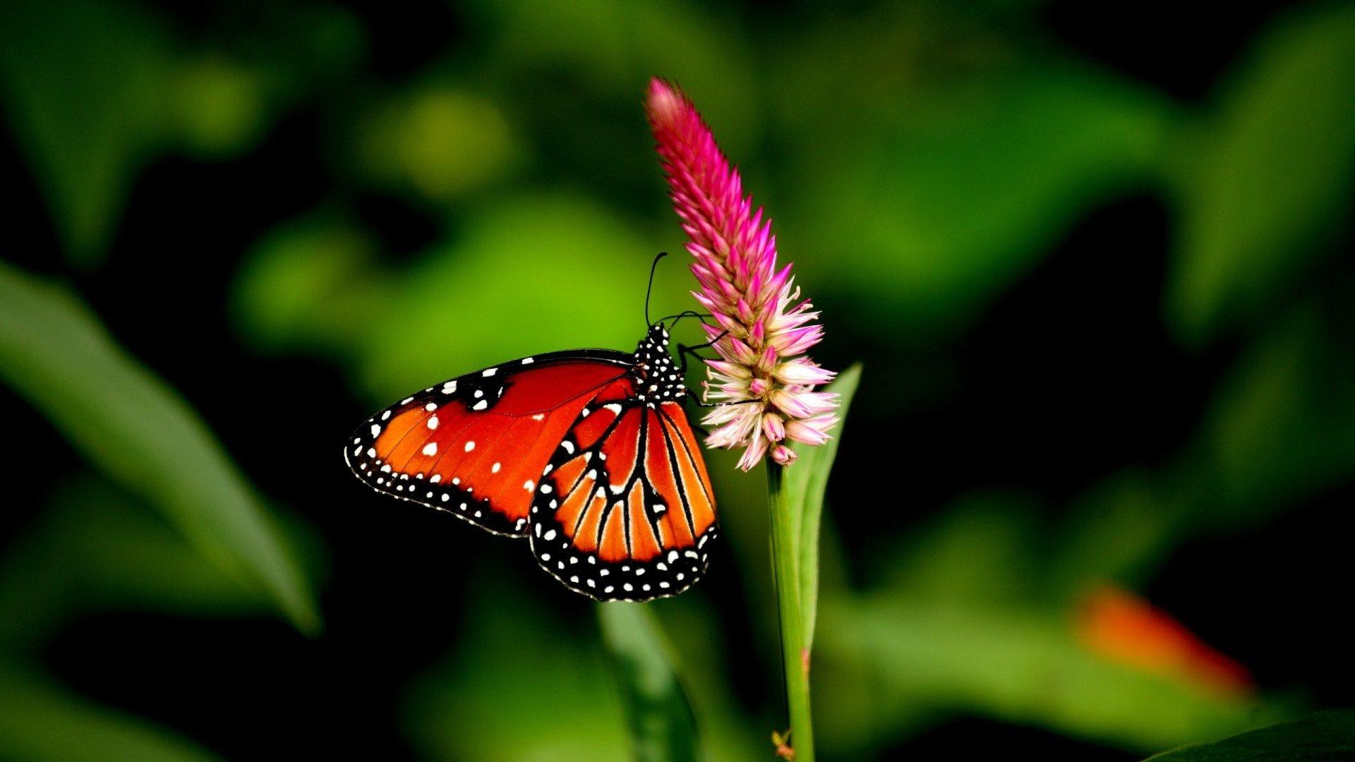 rainforest butterfly wallpaper - photo #22