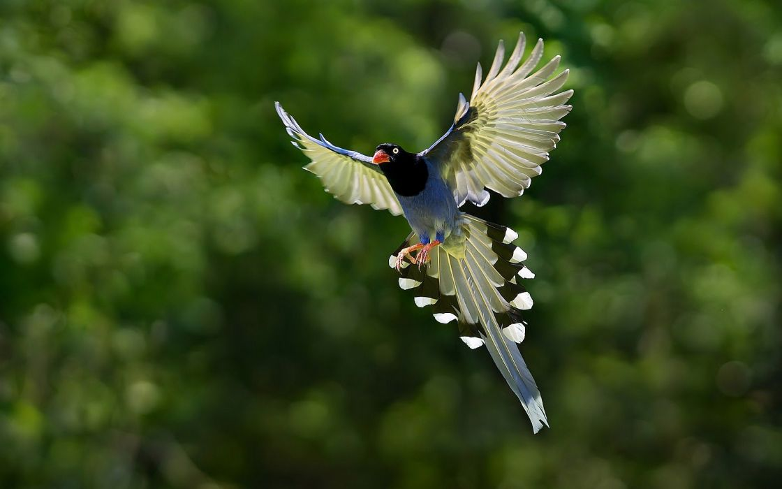 nature animal bird national geographic hd wallpapers wallpaper