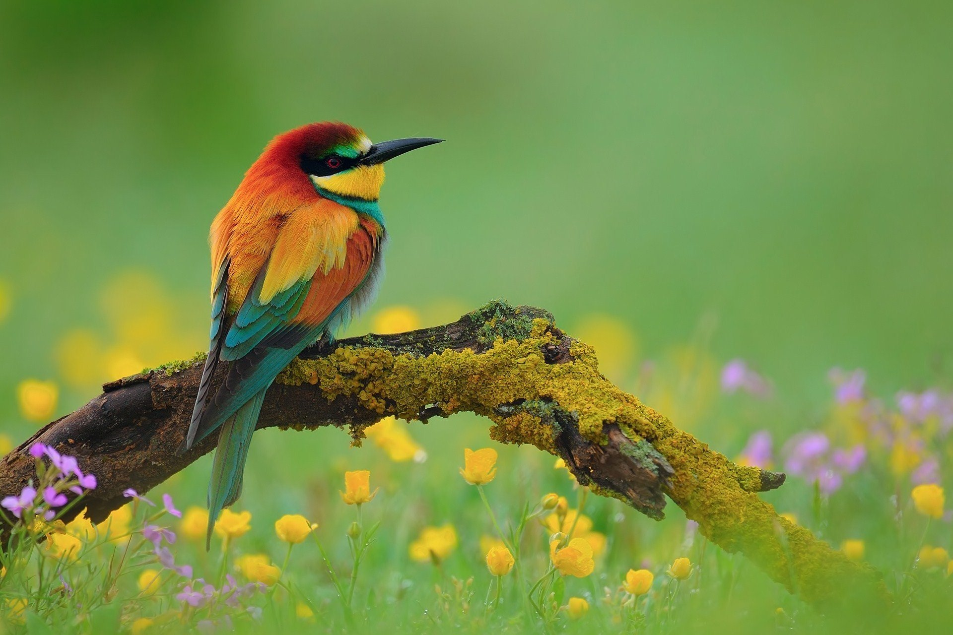 animal bird national geographic green flower hd wallpapers wallpaper