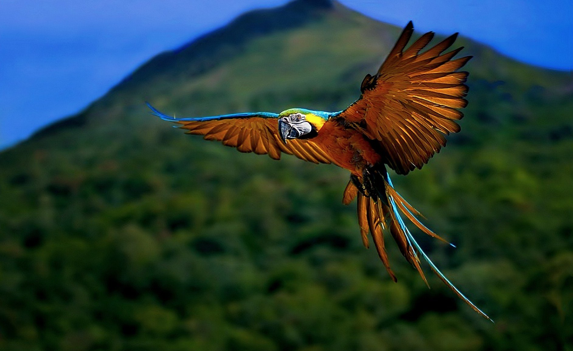 Nature Animal Bird National Geographic Forest Hd Wallpapers