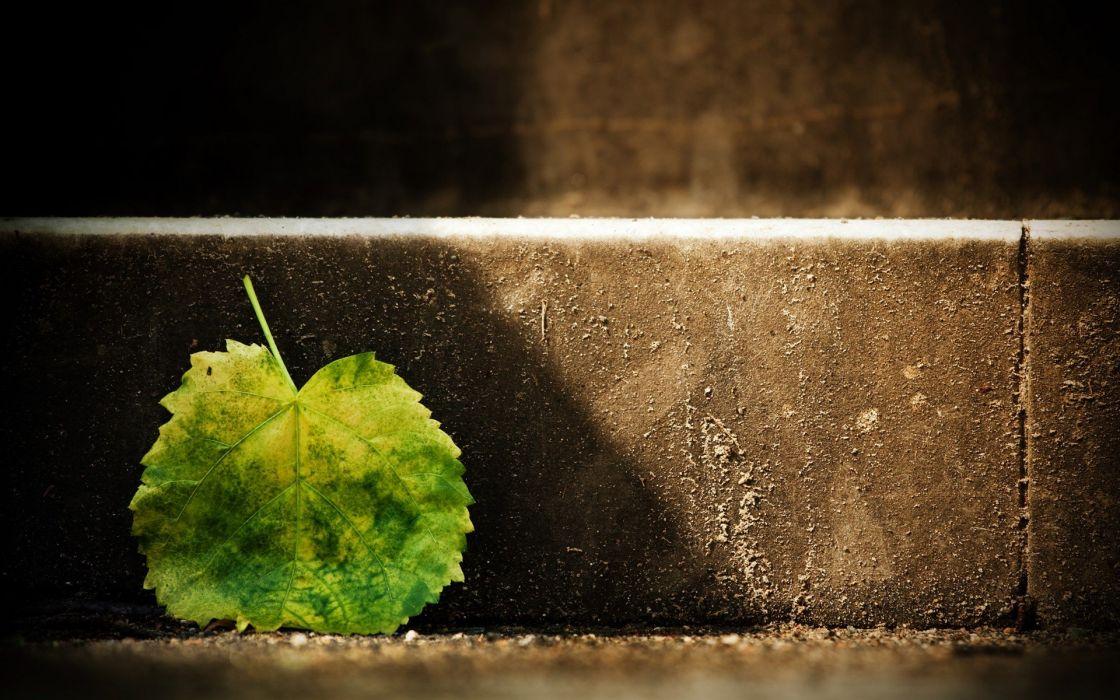 nature leaves macro wallpaper