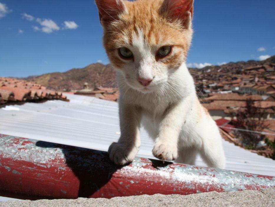 cats animals macro wallpaper
