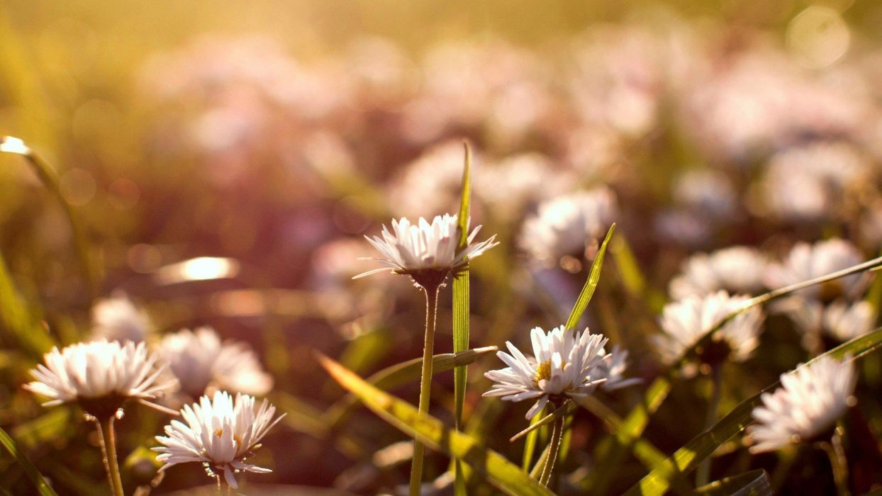 close-up nature flowers plants depth of field bright wallpaper
