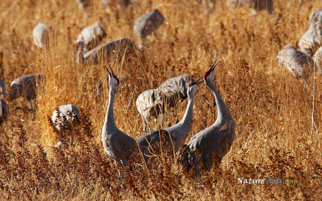 landscapes nature cranes wallpaper