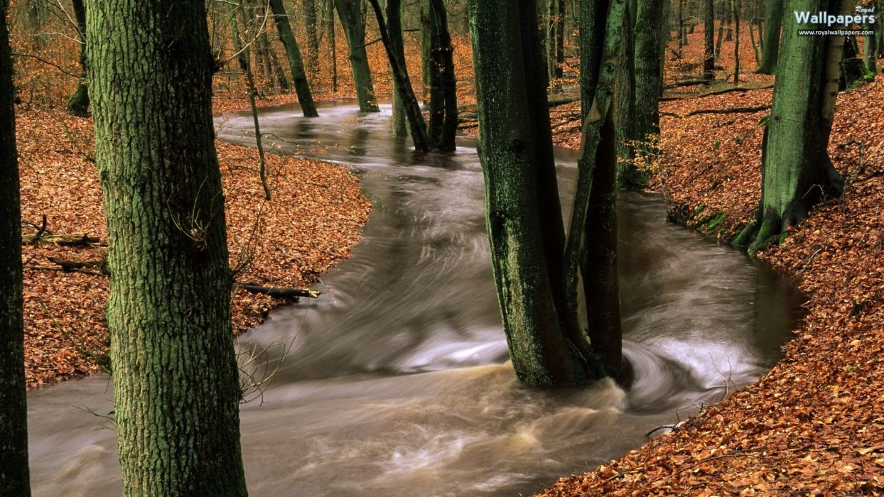 nature trees forests rivers wallpaper