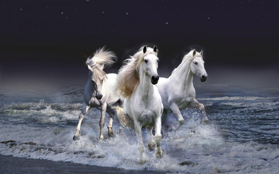 3D view horses photo manipulation wallpaper