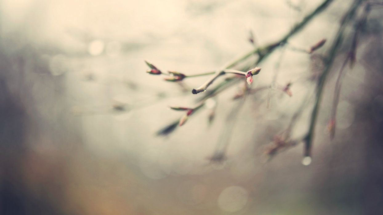 nature spring water drops depth of field branches spring season  wallpaper