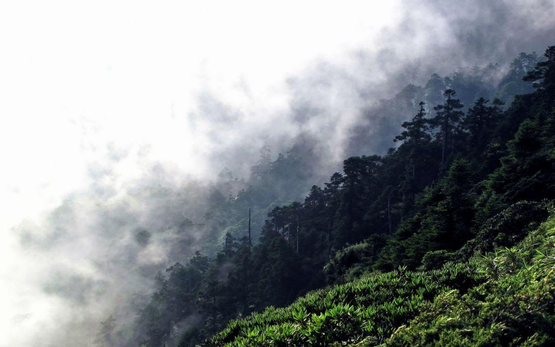 clouds landscapes nature trees forests grass hills mist hillside wallpaper