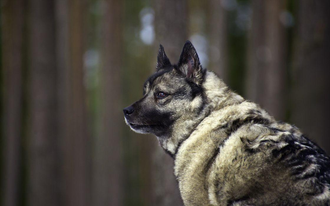 dogs pets wallpaper