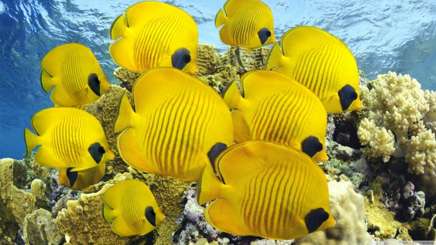 fish tropical wallpaper