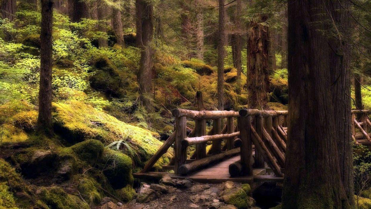 landscapes nature forests bridges wallpaper