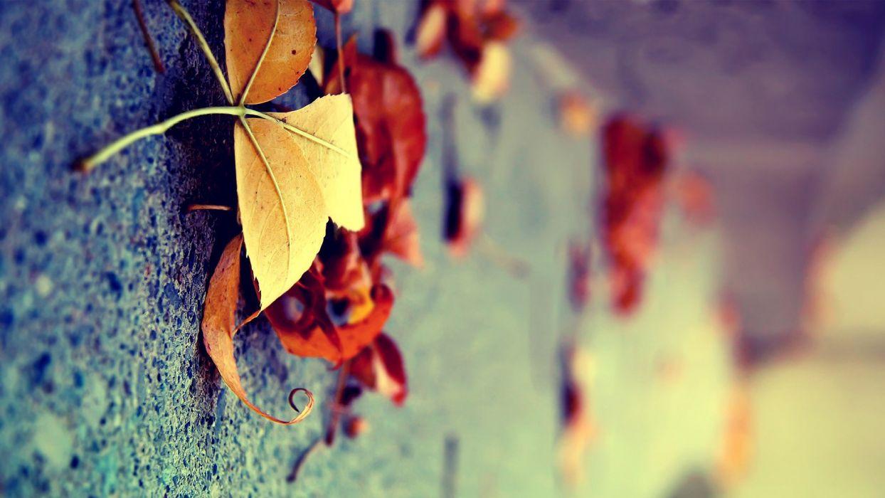 nature leaves plants wallpaper