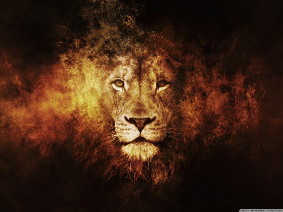 lion 13-wallpaper-2560x1920 wallpaper