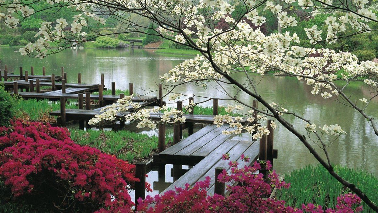 flowers water lake  wallpaper
