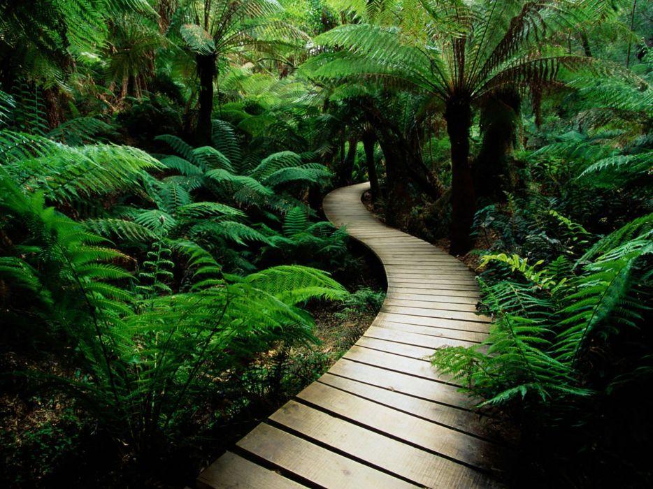 serene nature green plants  wallpaper
