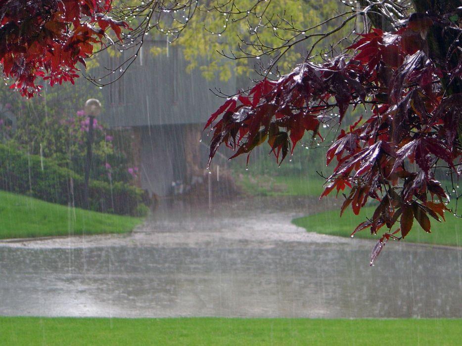 rain in park plants wallpaper