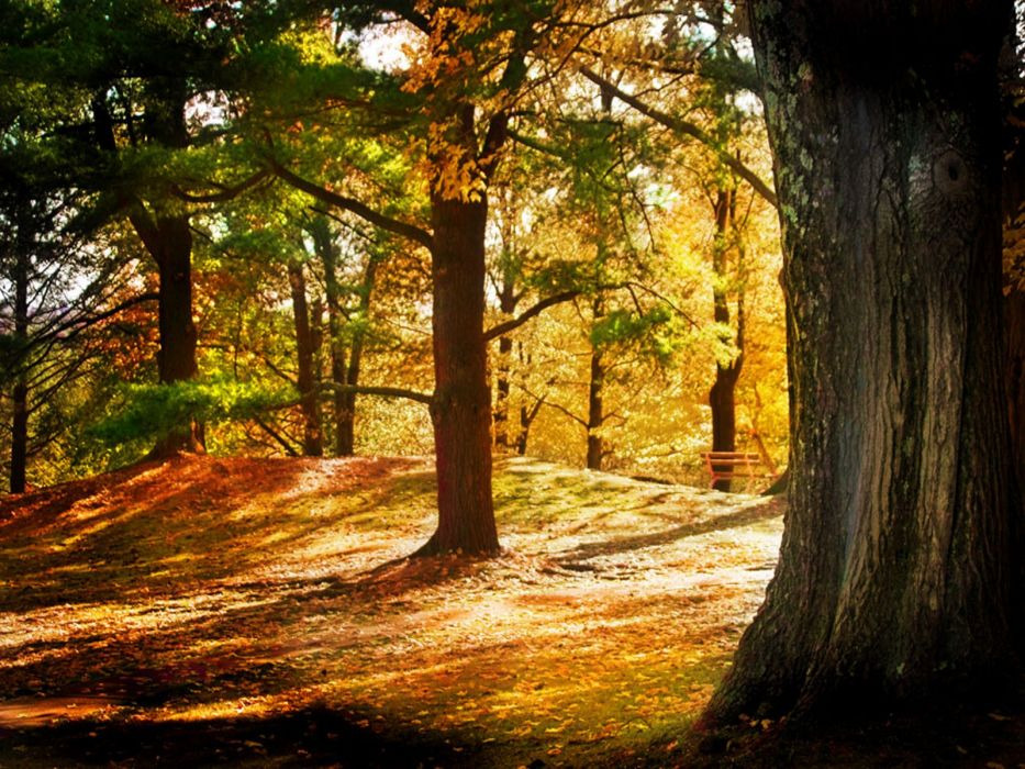 forest wood autumn wallpaper