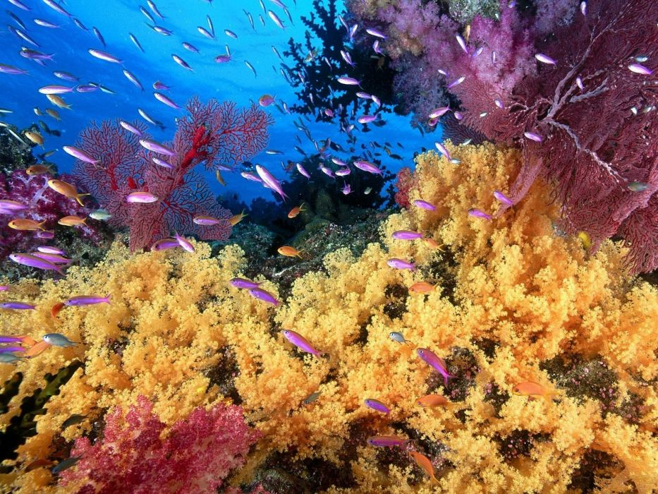 animals coral reef wallpaper