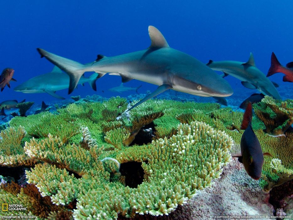 nature animals National Geographic national wallpaper