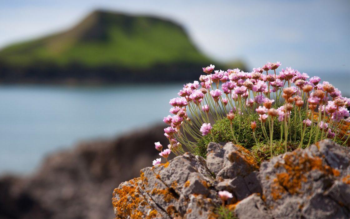 flowers rocks plants islands moss blurred background wallpaper