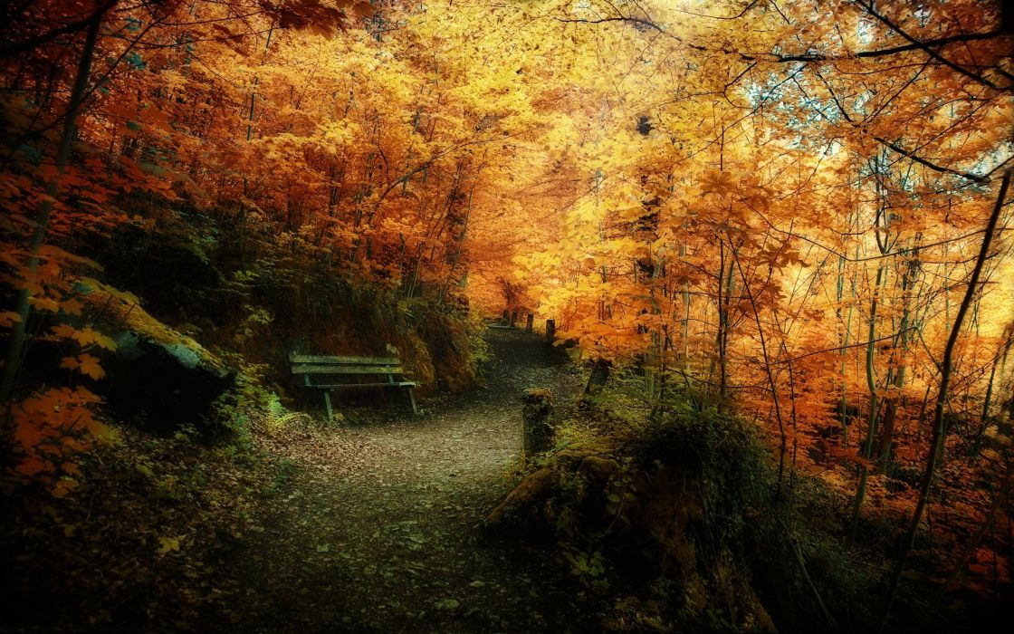 landscapes nature trees autumn leaves bench wallpaper