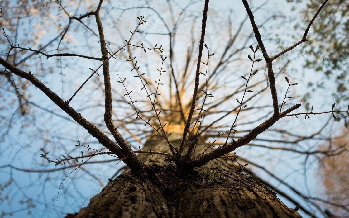 nature trees depth of field worms eye view branches low-angle shot wallpaper