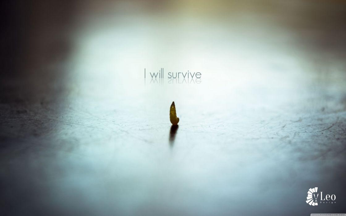 survive-wallpaper-3840x2400 wallpaper