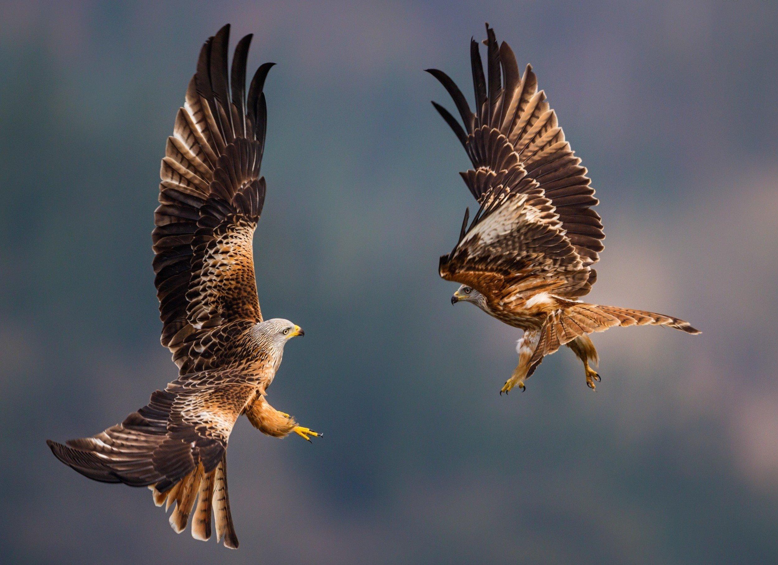 Nature animal bird national geographic water reflection - National geographic wild wallpapers ...