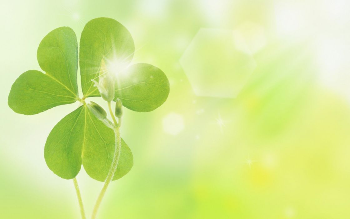 nature leaves clover wallpaper