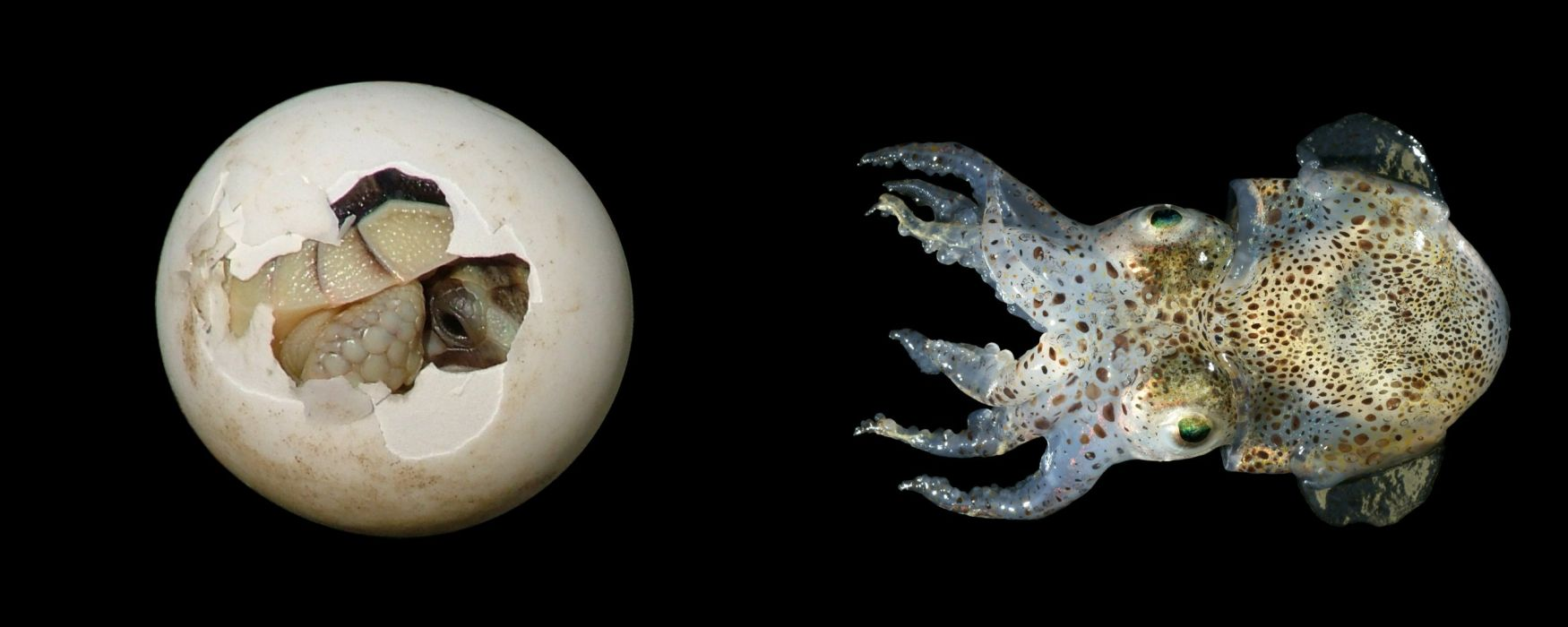 animals underwater wallpaper