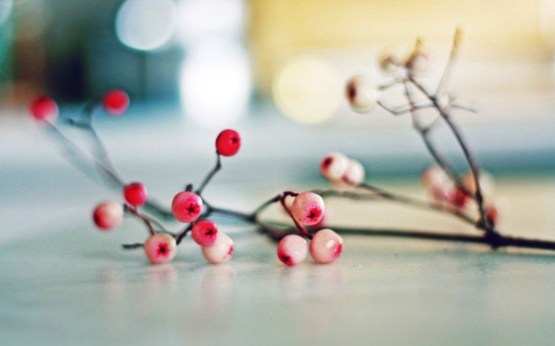 flowers bokeh berries wallpaper