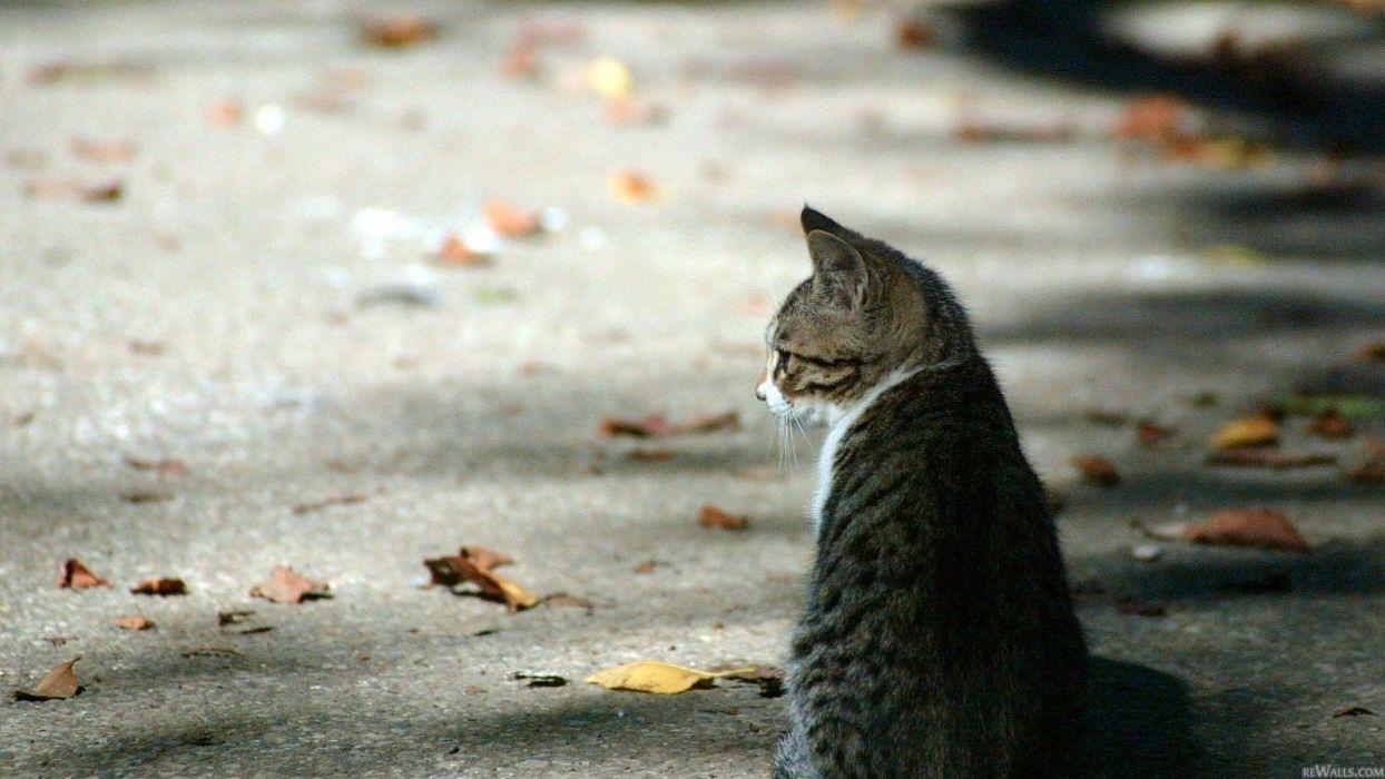 cats leaves roads wallpaper