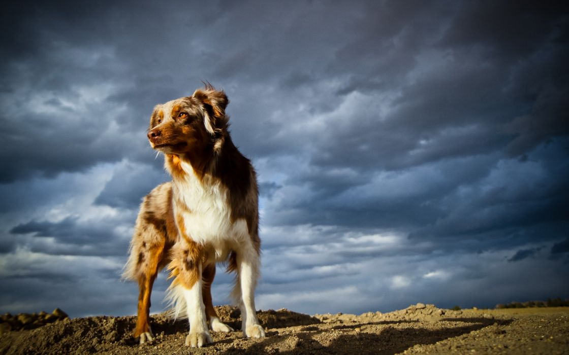 animals dogs Jootix wallpaper