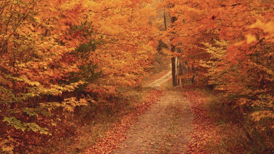 trees New England wallpaper