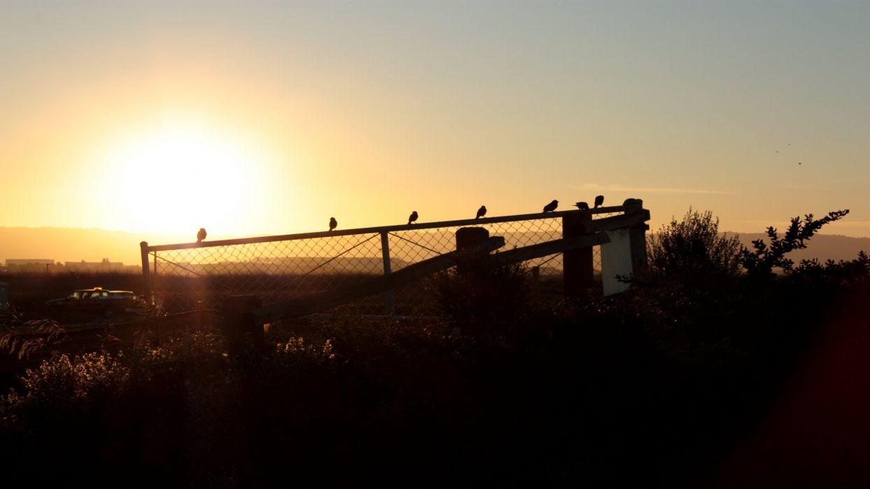 sunset landscapes birds wallpaper