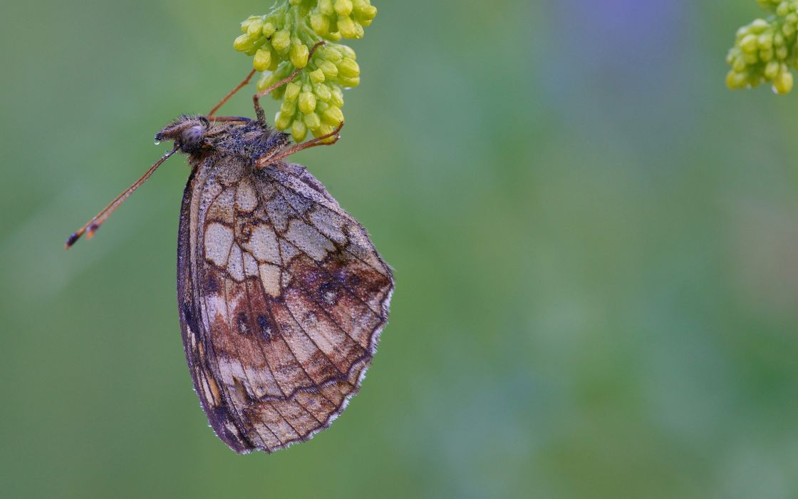 nature animals insects butterflies wallpaper
