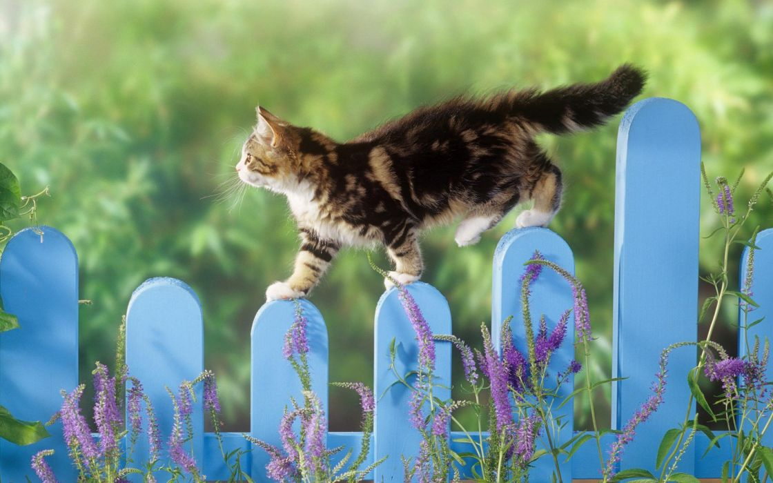 fences cats animals depth of field picket fence wallpaper