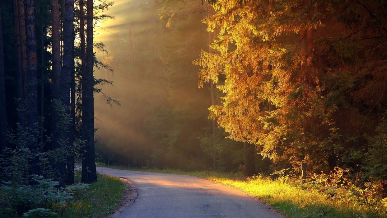 landscapes nature trees autumn forests roads land wallpaper