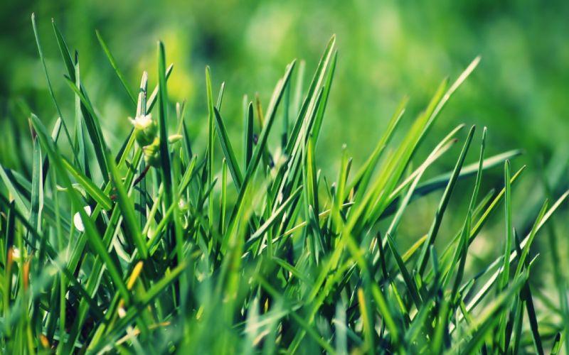 green grass fields summer plants wallpaper